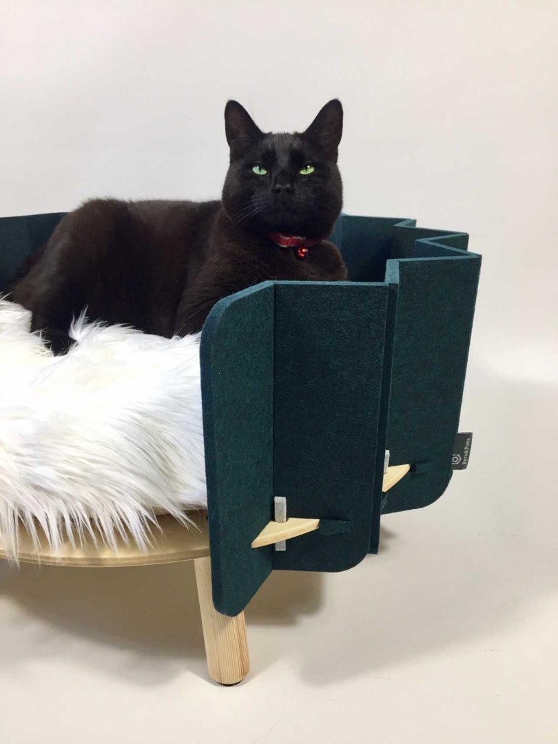 cat sitting in pet bed