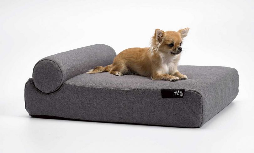 Pet bed with small dog resting