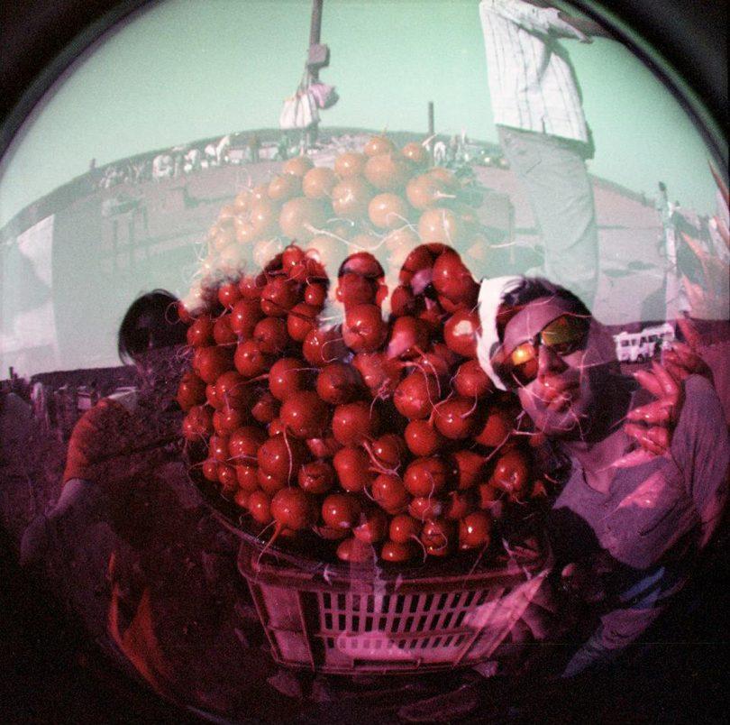 fisheye lens photo of cherries
