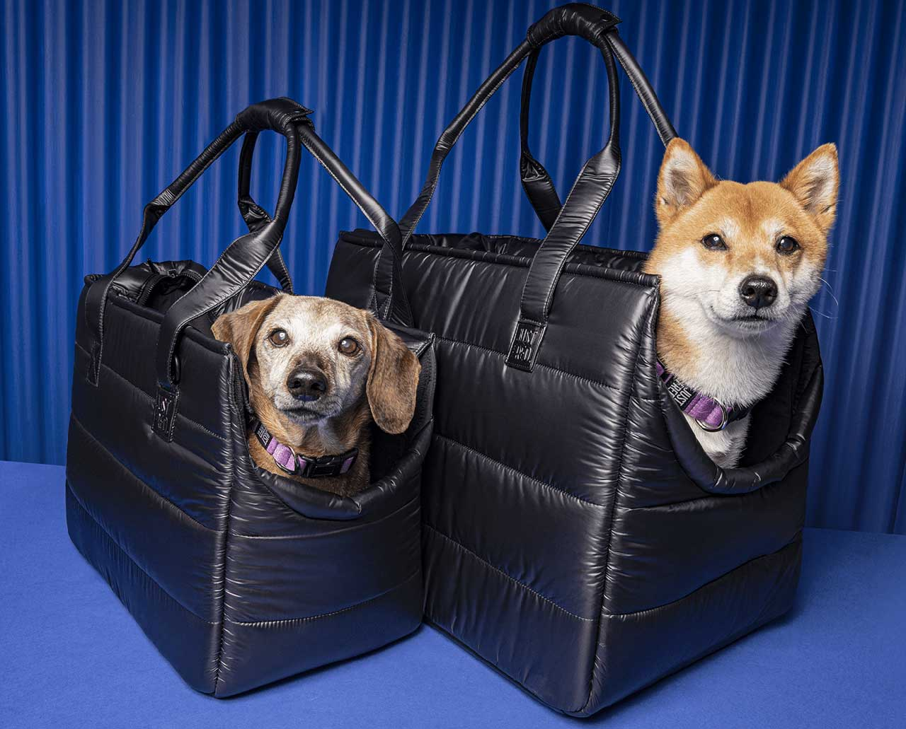 JUST FRED's Minimalist Pet Accessories Support Senior Dogs in Shelters