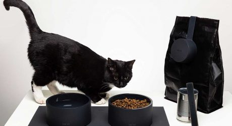Elevate Your Pet's Mealtimes With the Modern MOGO Feeding Kit