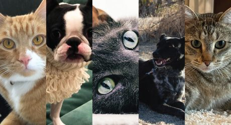 The Design Milk Team Celebrates National Pet Day!