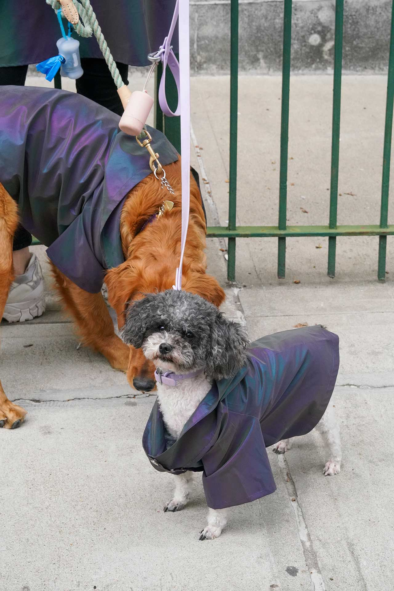 dogs on the street in matching raincoats