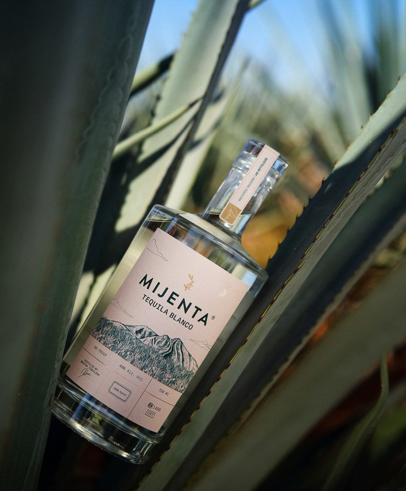 bottle of tequila balanced between agave leaves