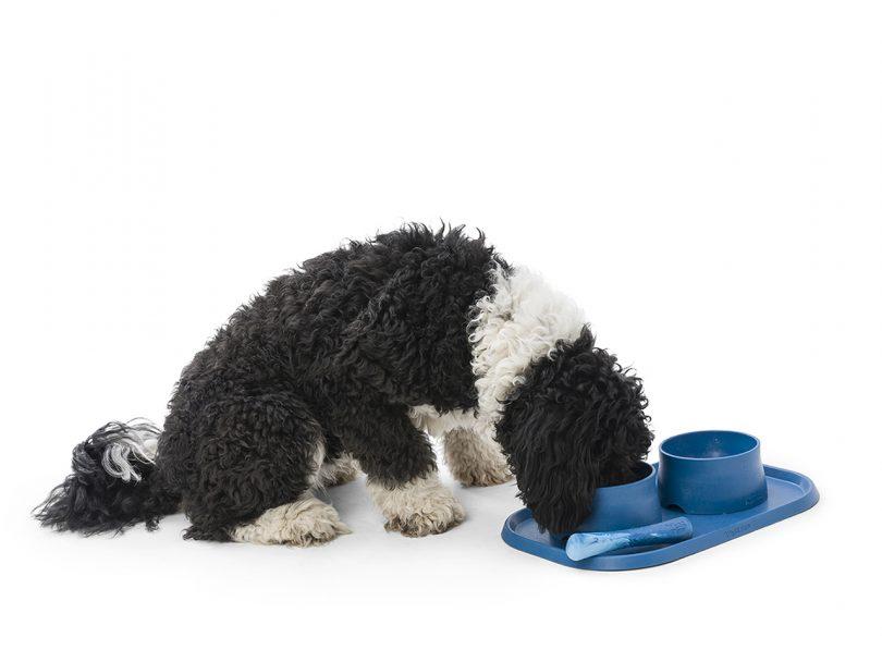 cachorro comendo em tigelas azuis e esteira em fundo branco