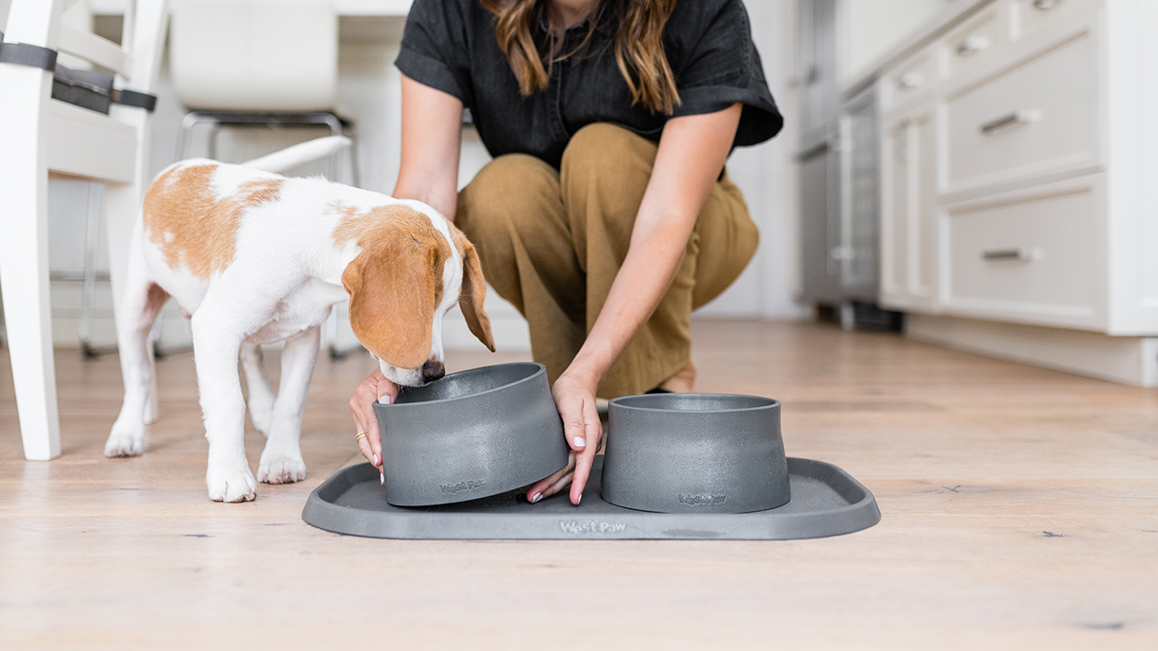Small Biz Spotlight: The West Paw Collection of Pet Accessories Made With Ocean-Bound Plastic