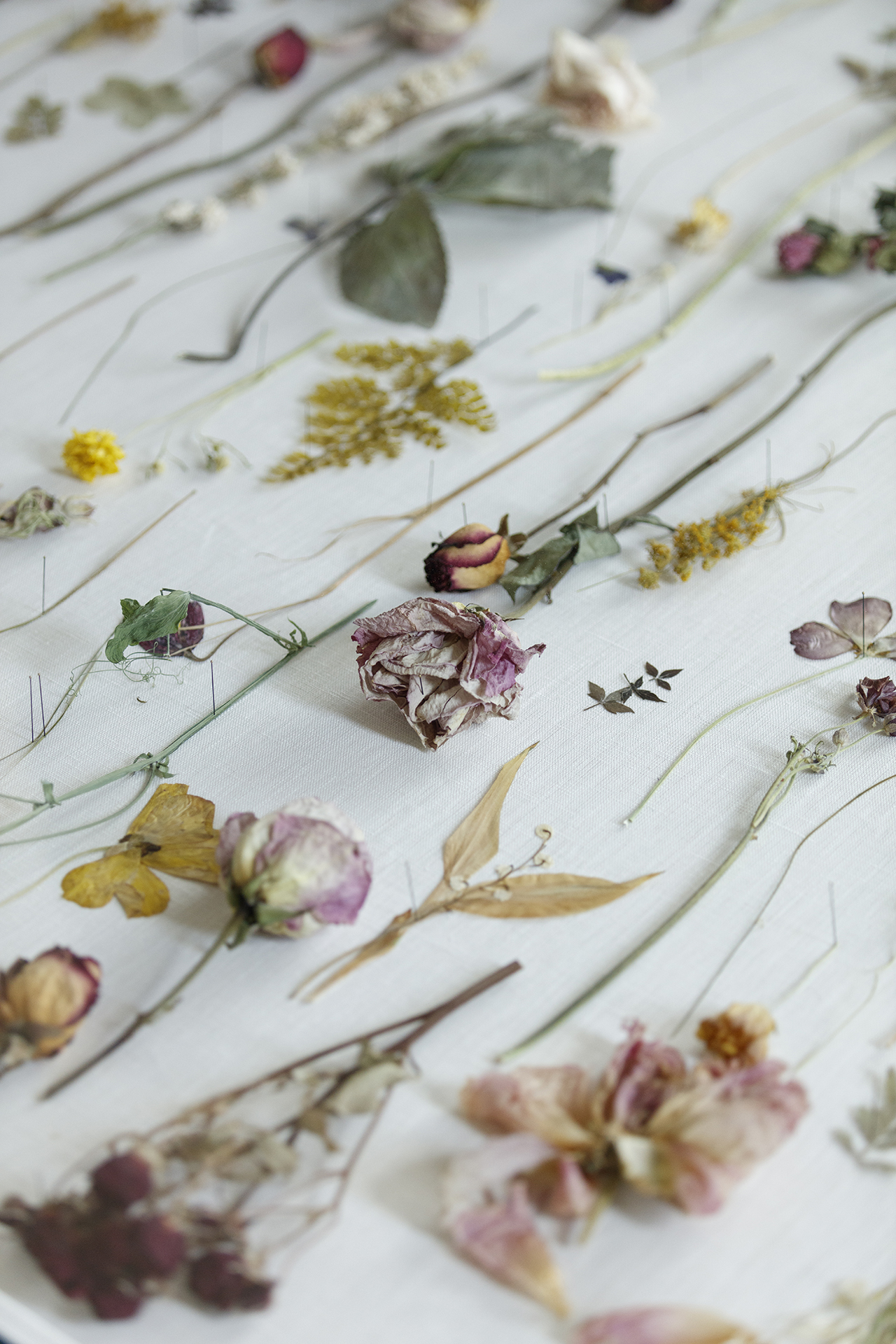 collection of dried flowers on white surface