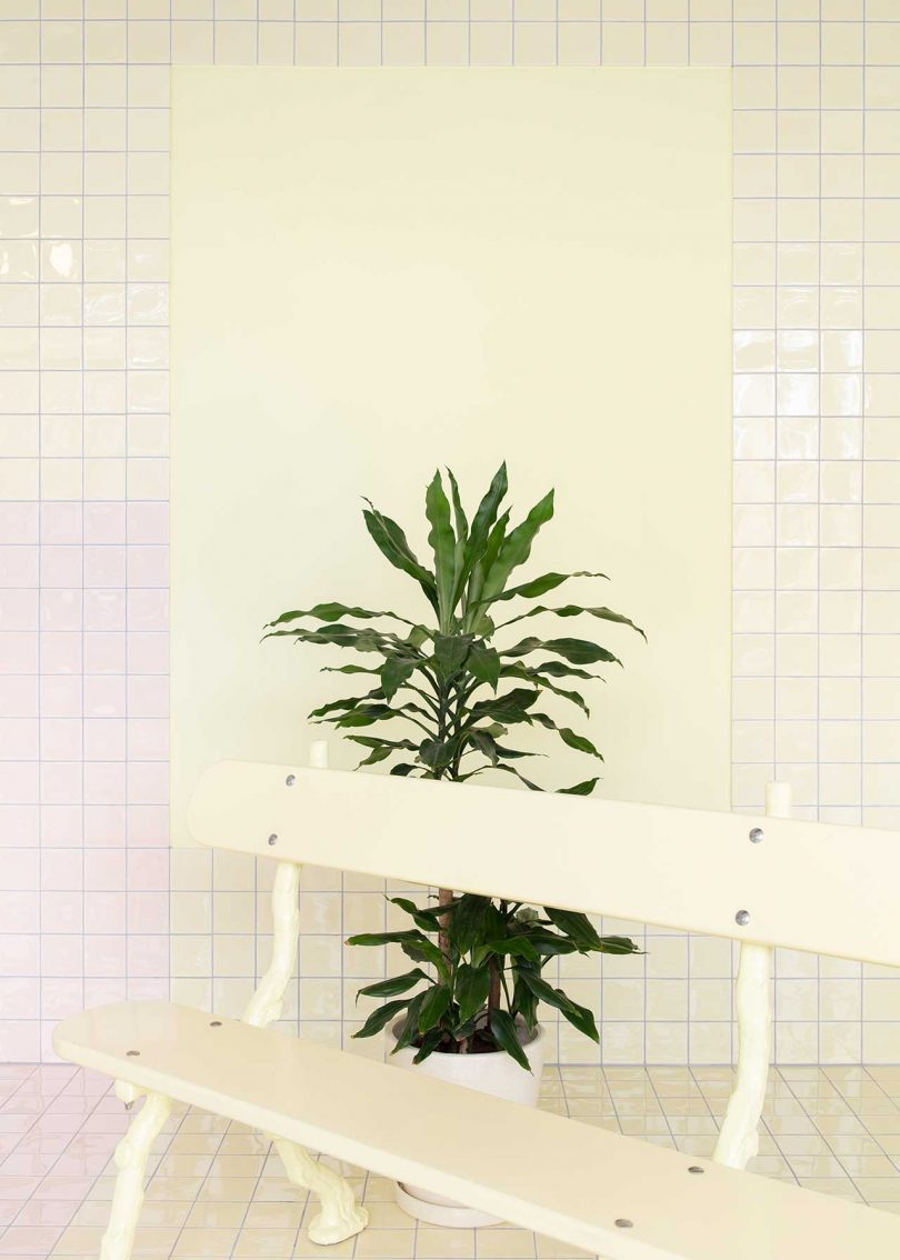 pastel tiled room with bench and plants