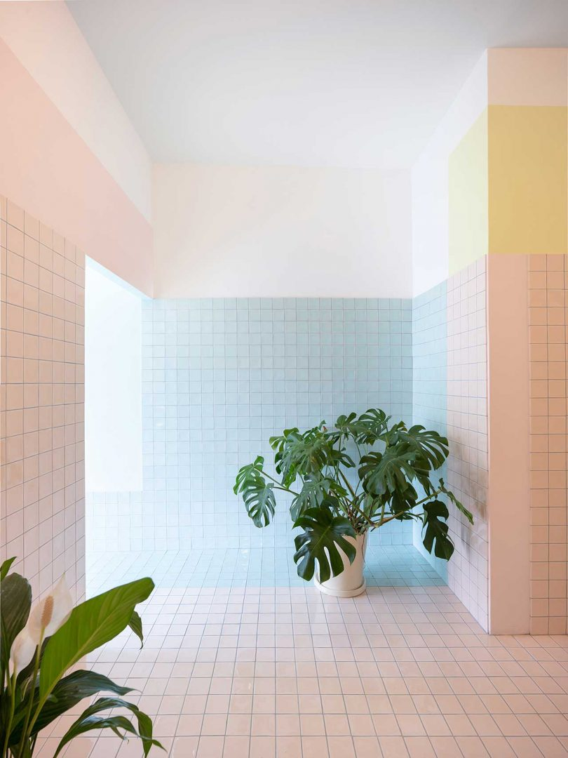 pastel tiled room with plants