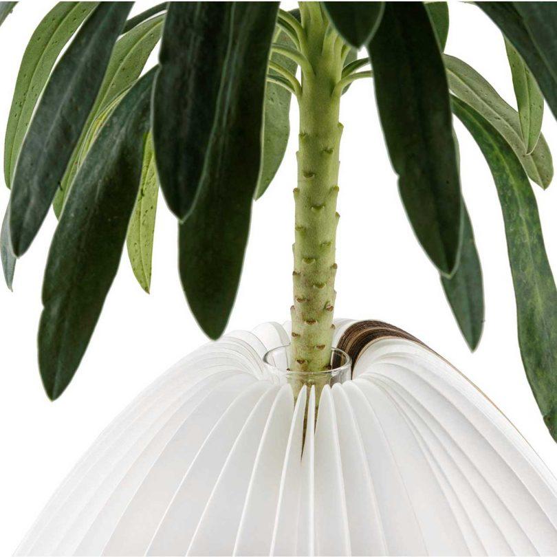 paper lamp holding plant stem