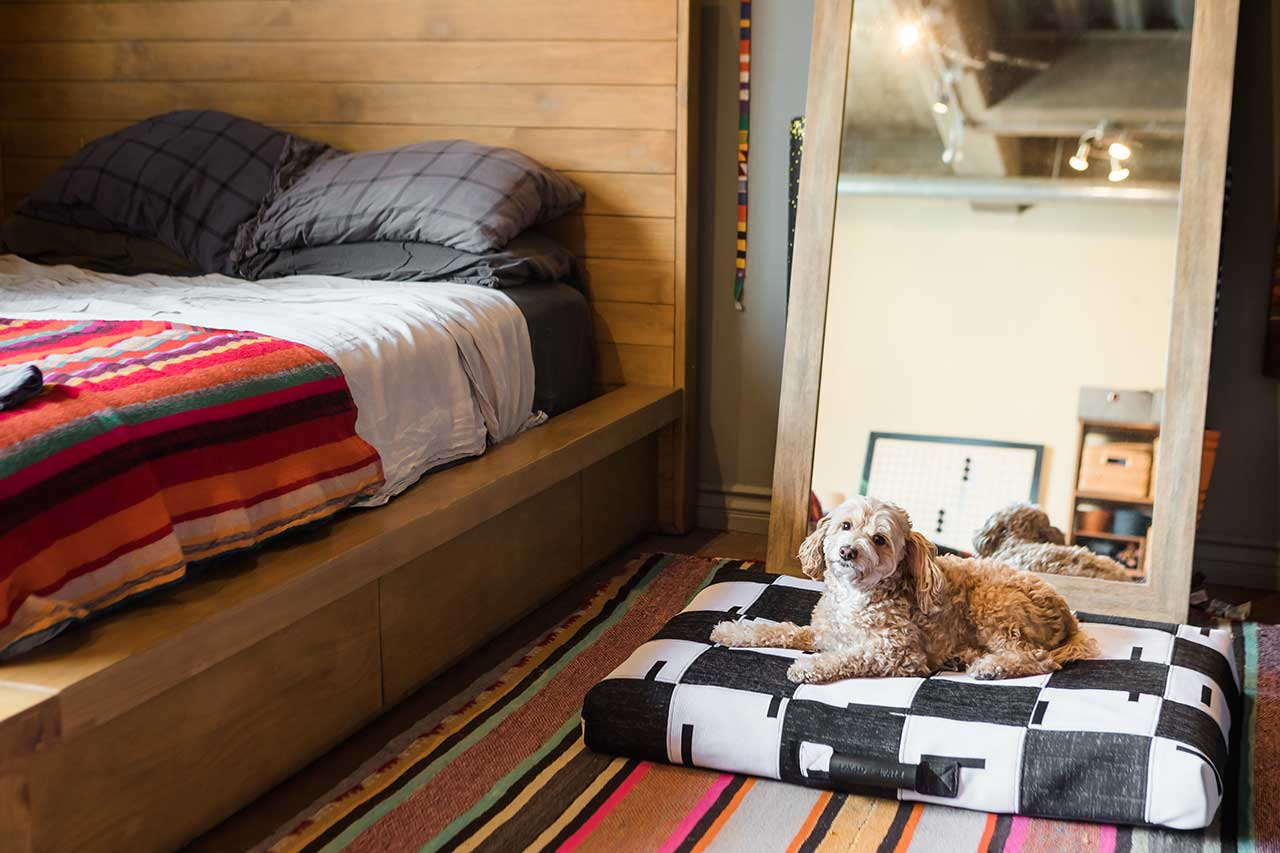 dog on a patterned dog bed next to a bed