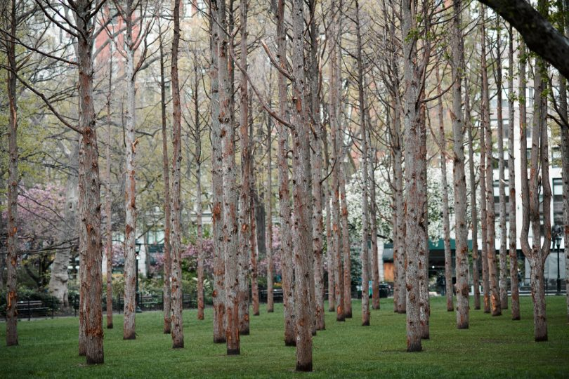 Ghost Forest by Maya Lin