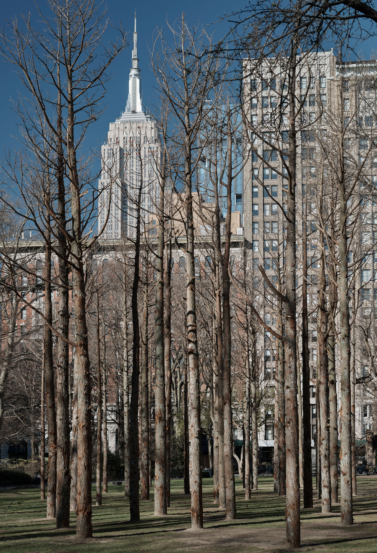 Ghost Forest with Empire State Building