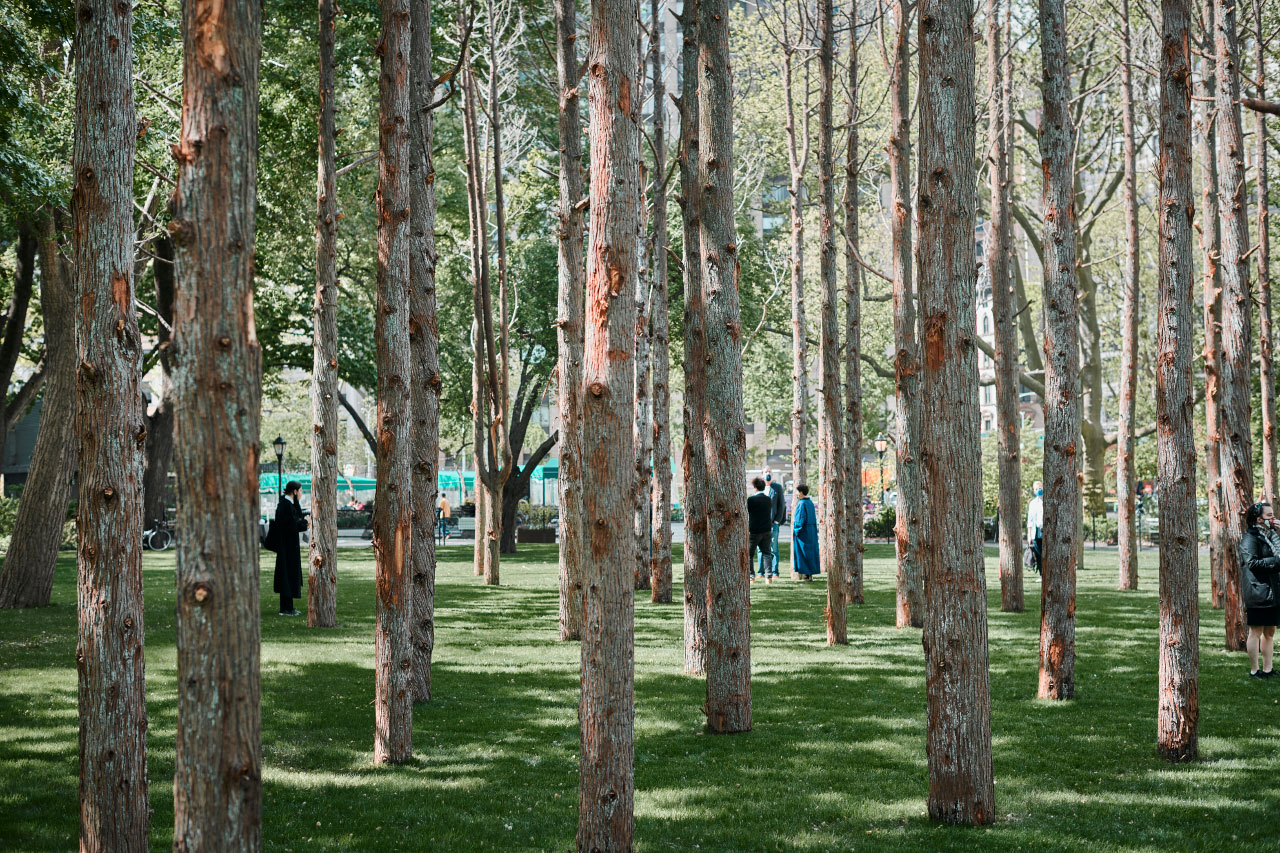 Visitors within Ghost Forest