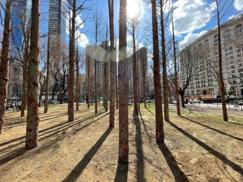The shadows of Ghost Forest