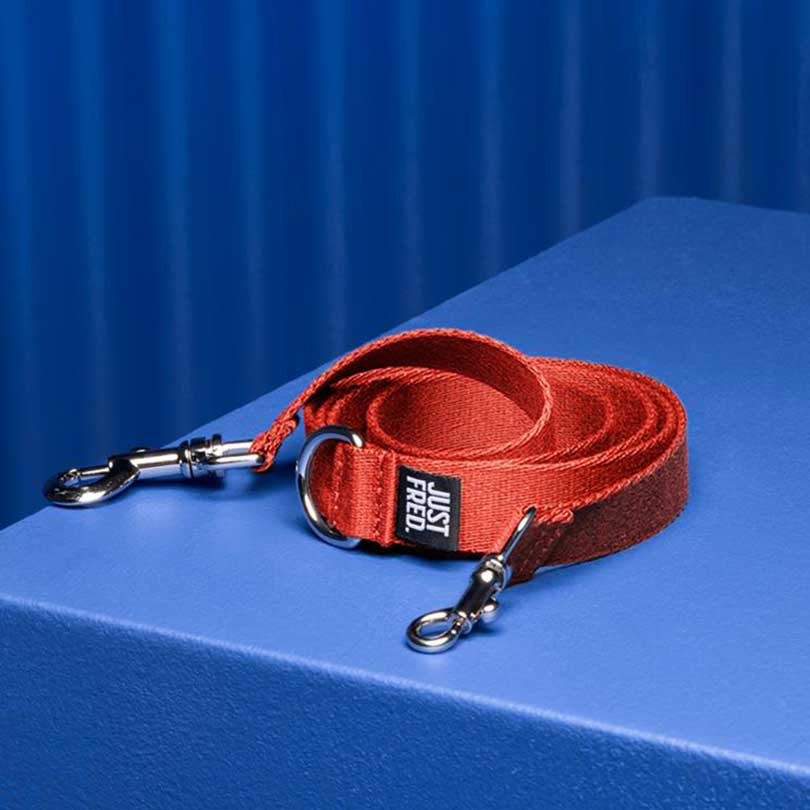 red dog leash rolled up