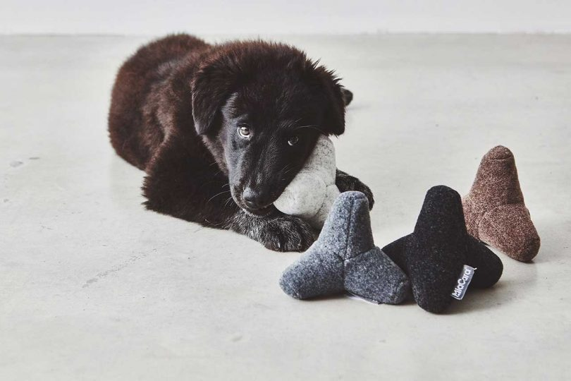 black dog chewing on fuzzy toys