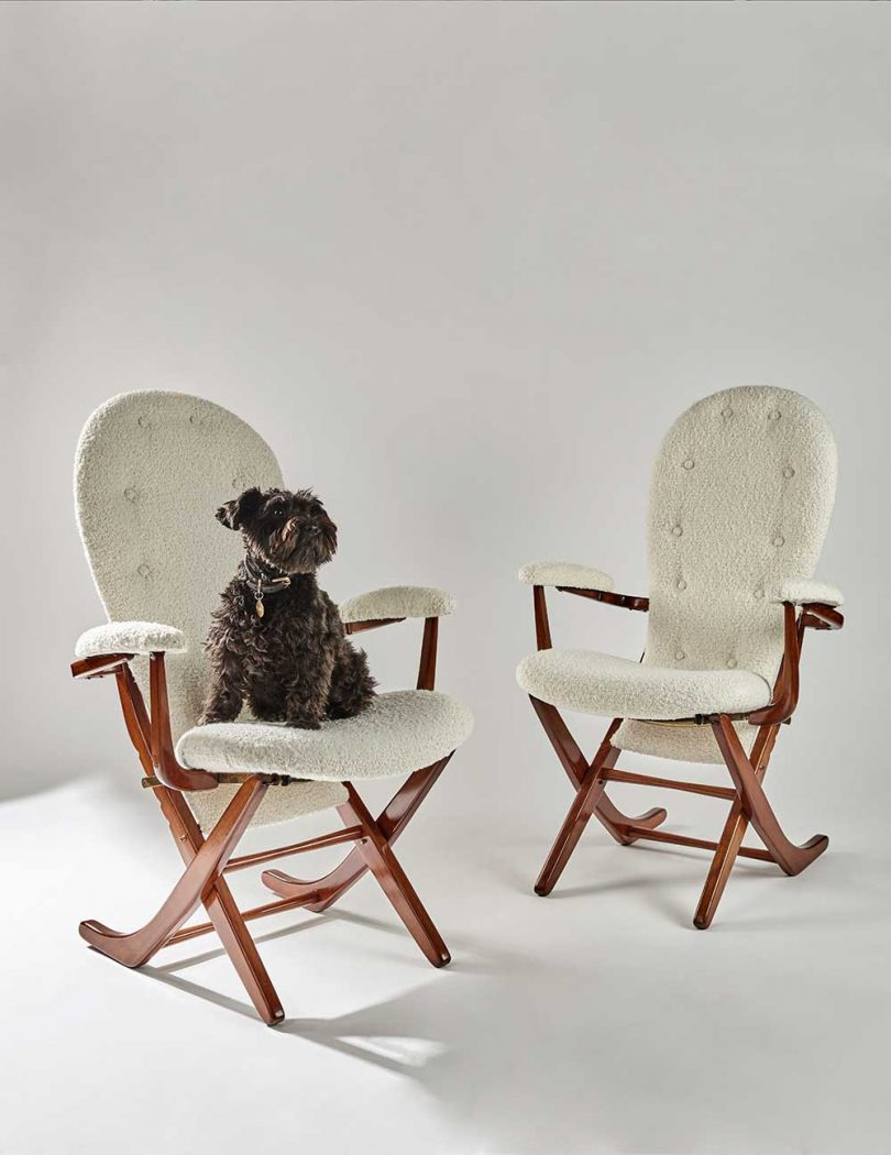 dog sitting on one of two white chairs