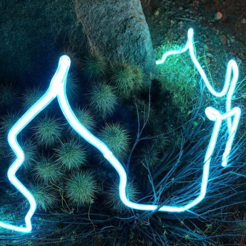 neon light in nature