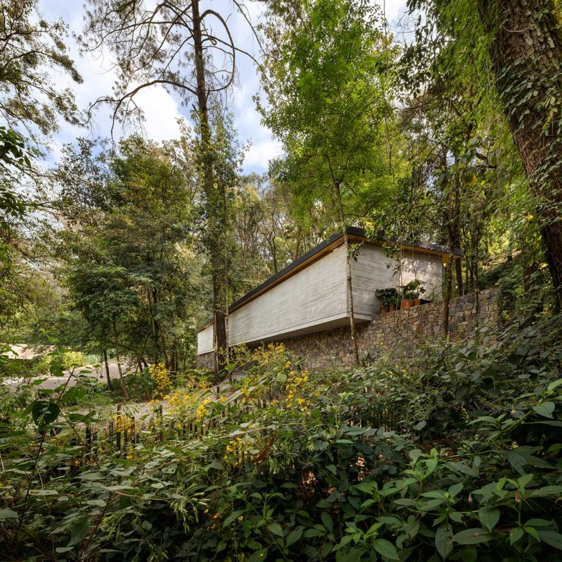 Casa moderna en medio de árboles y vegetación