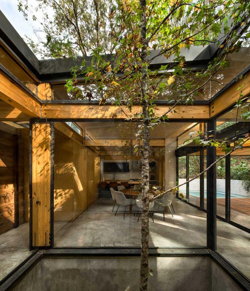En el patio interior de la casa moderna en el centro del árbol.