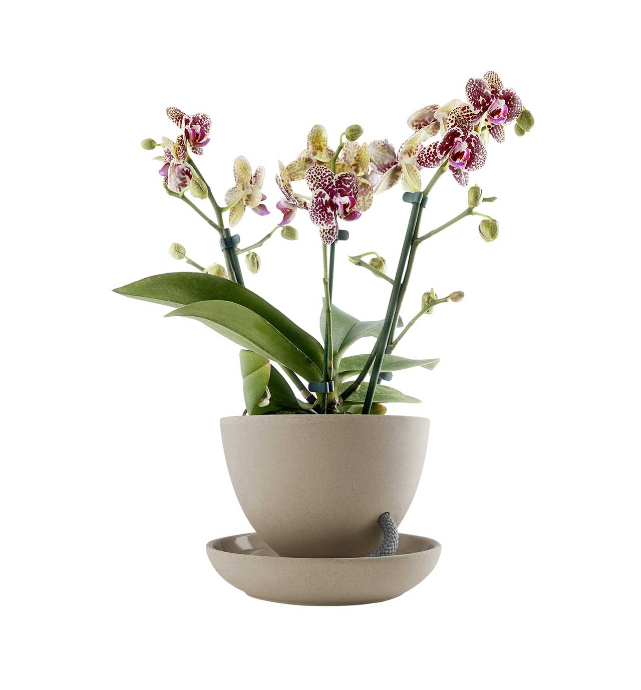 sand colored self-watering flowerpot with orchid planted in it